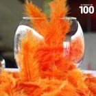 Plumes de décoration Oranges