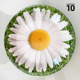 10 Assiettes carton 22 cm Décor marguerite