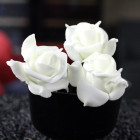 Roses mousse blanches 5 cm