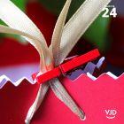24 mini-pinces en bois rouge 2,5 cm