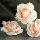 Roses mousse sur tige pêche 8 cm