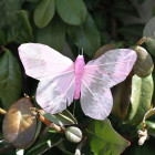 Papillon de décoration Vieux rose