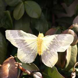 Papillon de décoration jaune pastel